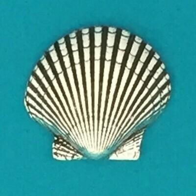 Scallop Shell - Basic Spirit
