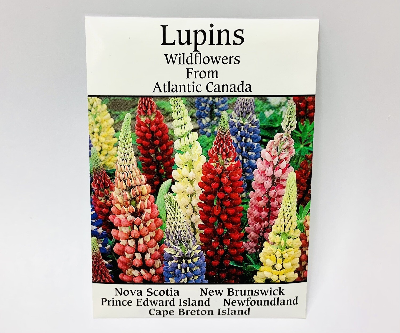 Lupin Seeds