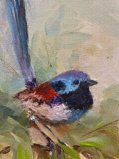 Good-Day to You, Splendid Fairywren