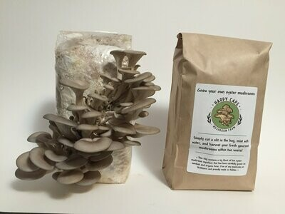 Oyster Mushroom Growing Kit