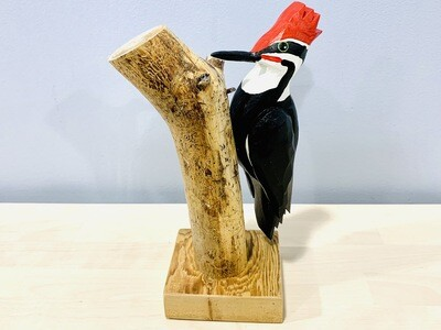 Pileated Woodpecker Timberdoodle