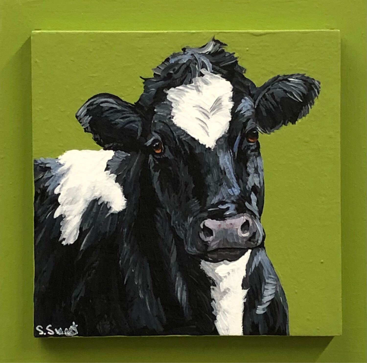 Holstein Cow on Spring Green
