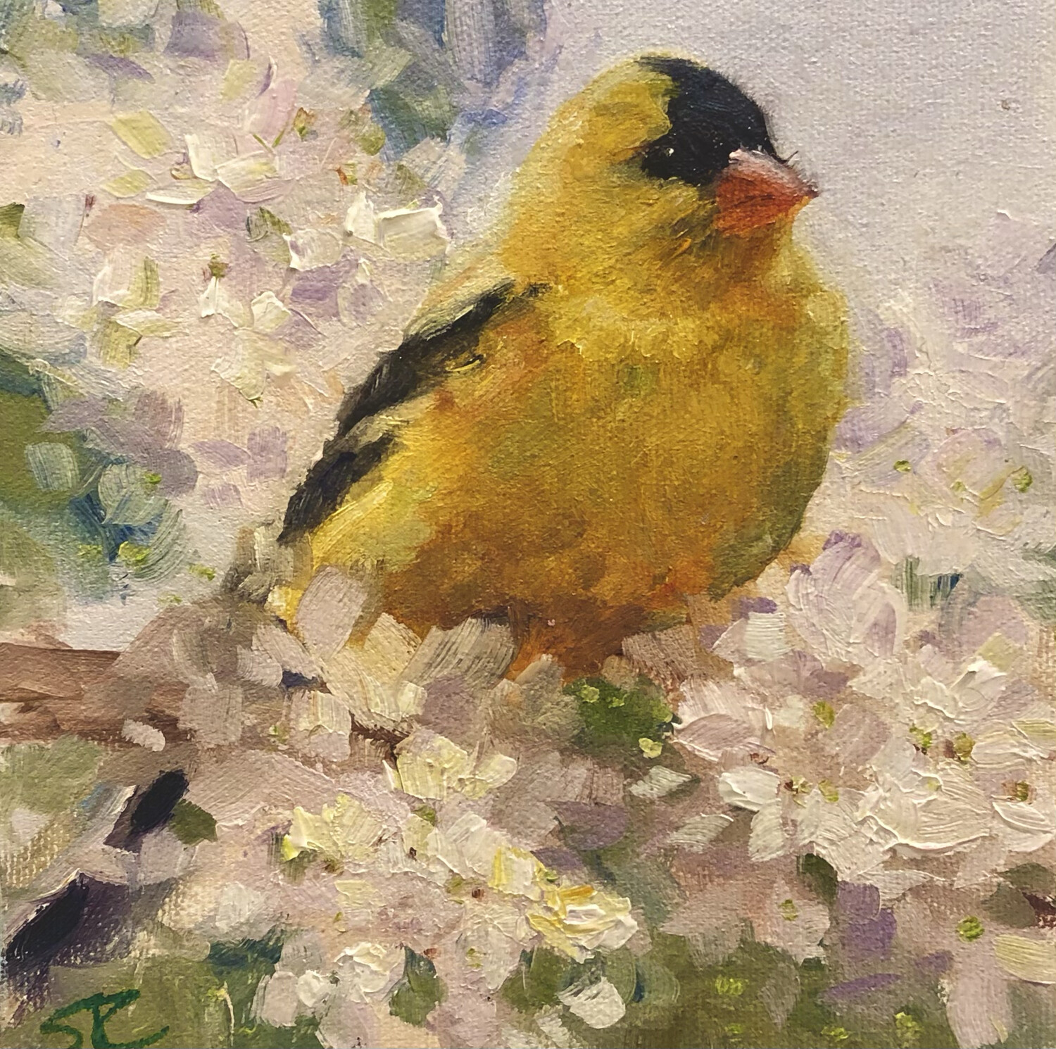 Love the Frills, Finch