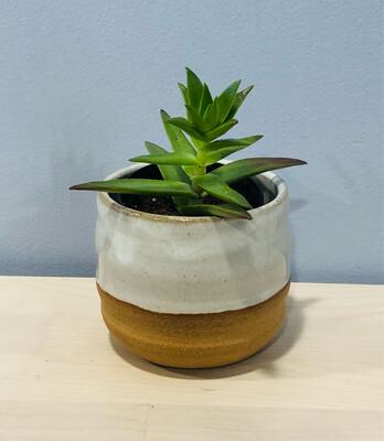 Cream Succulent Pot