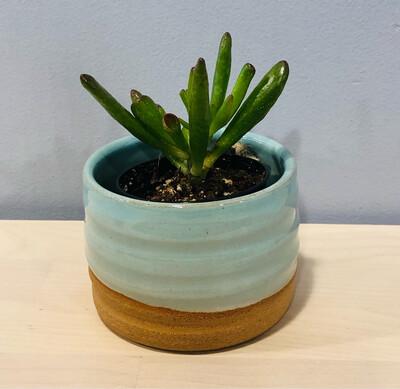 Small Aqua Succulent Pot