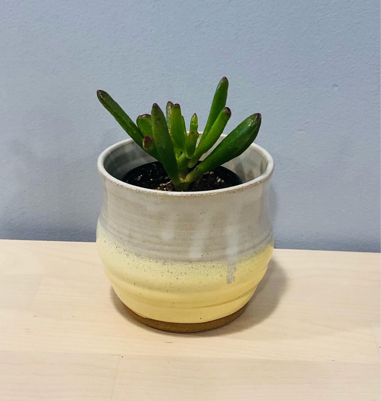 Yellow & Cream Succulent Pot