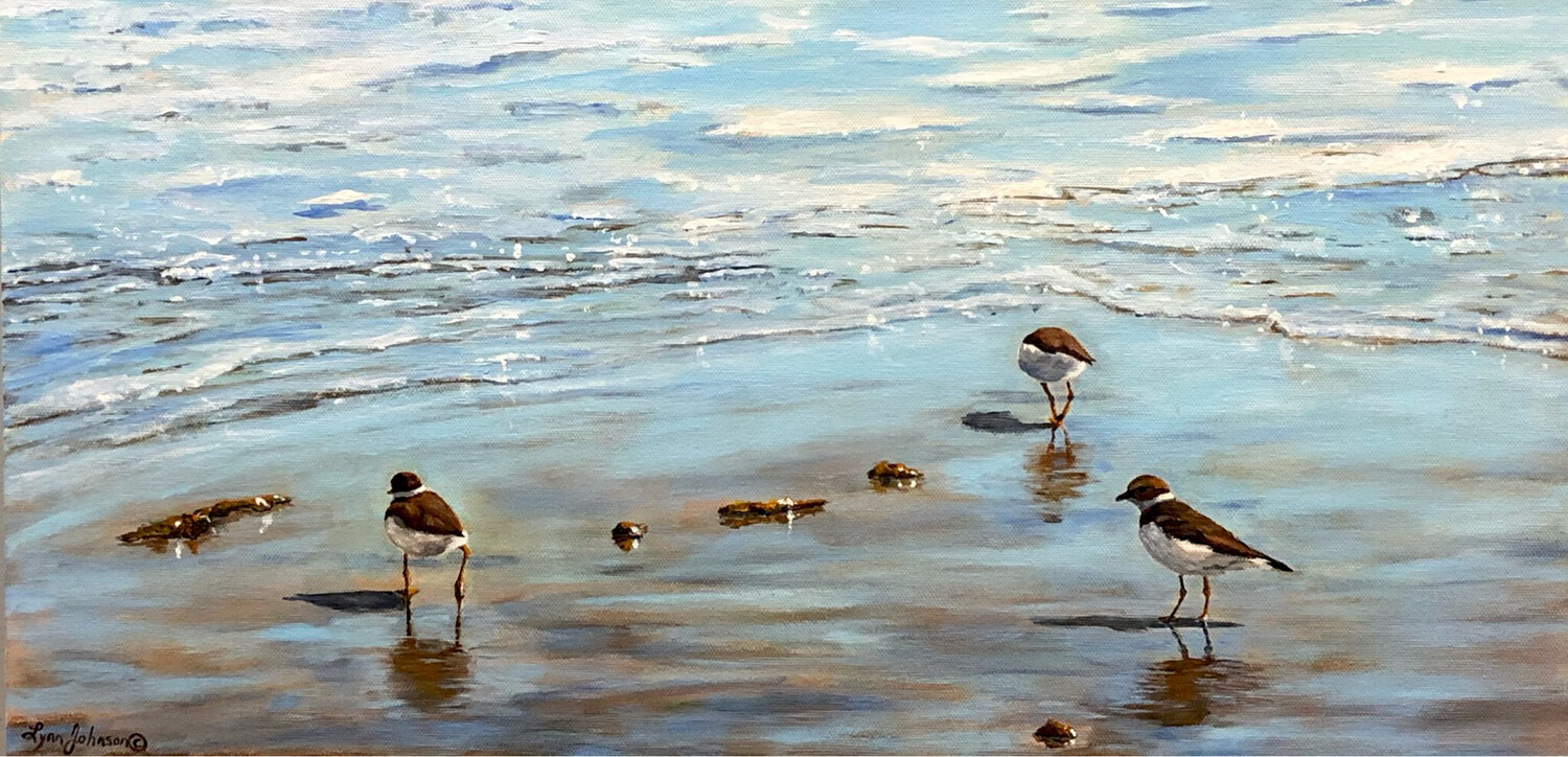 Little Beachcombers (Semipalmated Plovers)