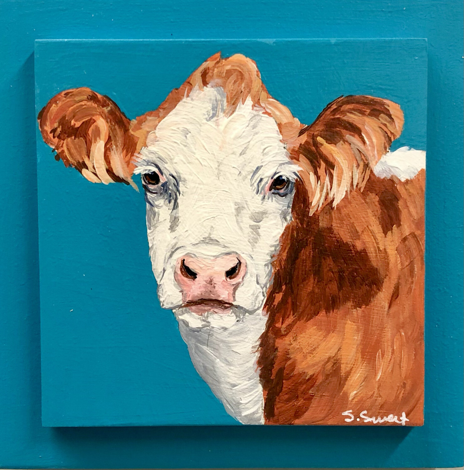 Simmental Cow on Spring Teal