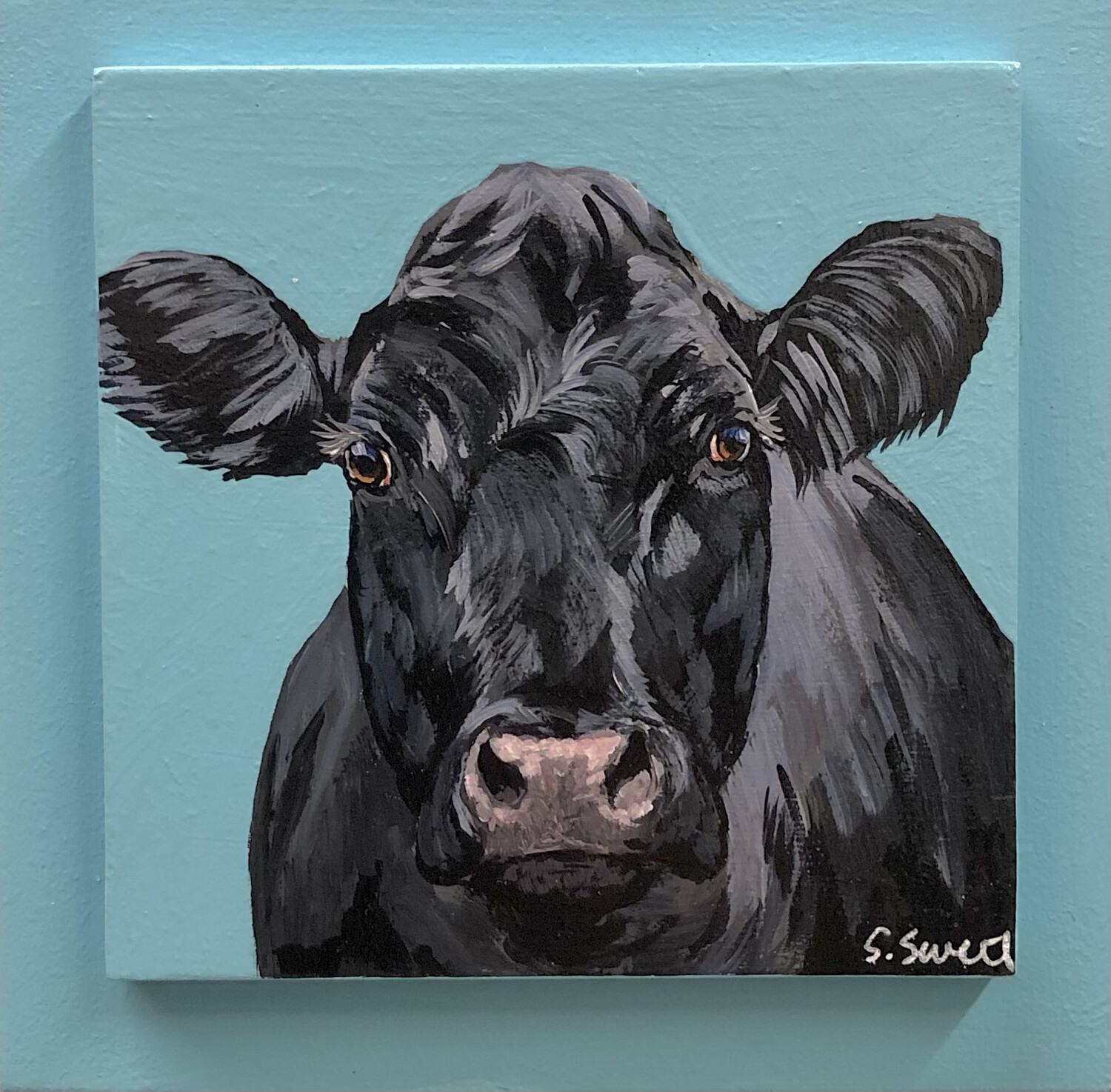 Angus Cow on Spring Blue