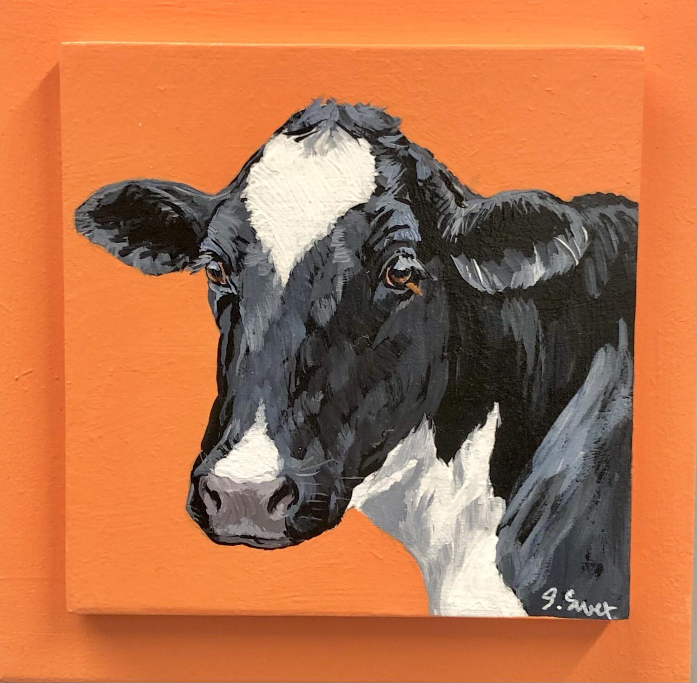Holstein Cow 6 on Spring Orange