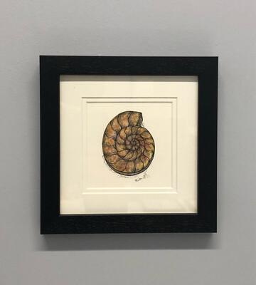 Ammonite Watercolour - Amy Nemeth