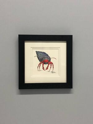 Hermit Crab White Background - Amy Nemeth