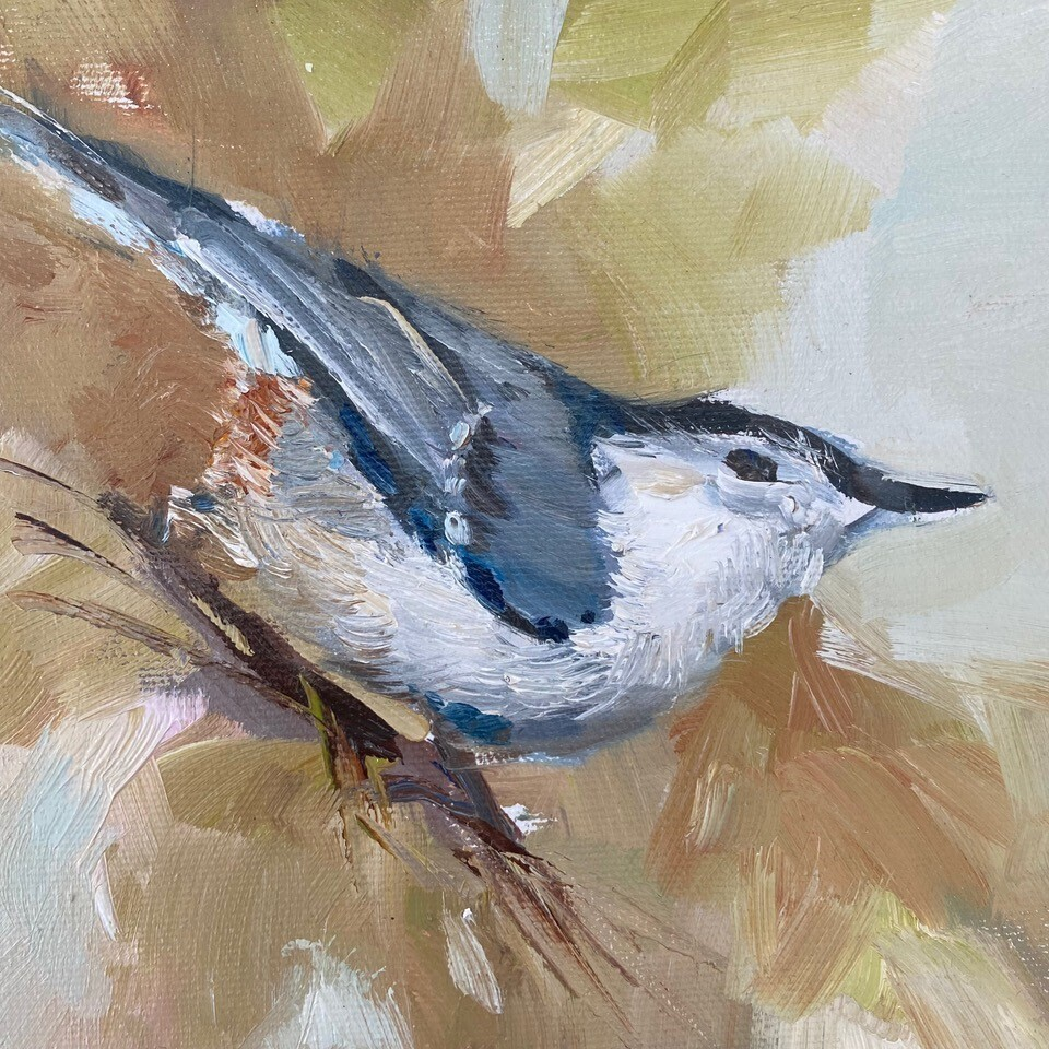 Bright Spot, White Breasted Nuthatch