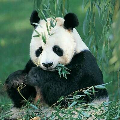 Microfiber cloth premium quality 'Panda'