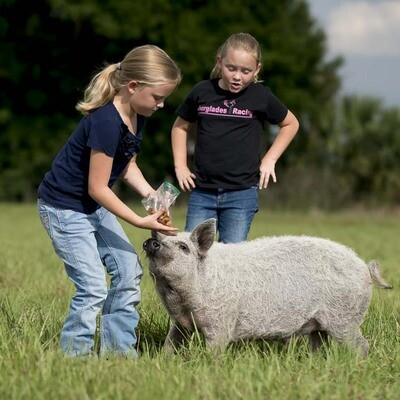 Pork Fresh Ham Roast (Average 3.5 lbs. @ $10/lb.)