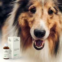 Natural Shelter - Huile CBD Sublinguale 6% pour chiens (+15kg)