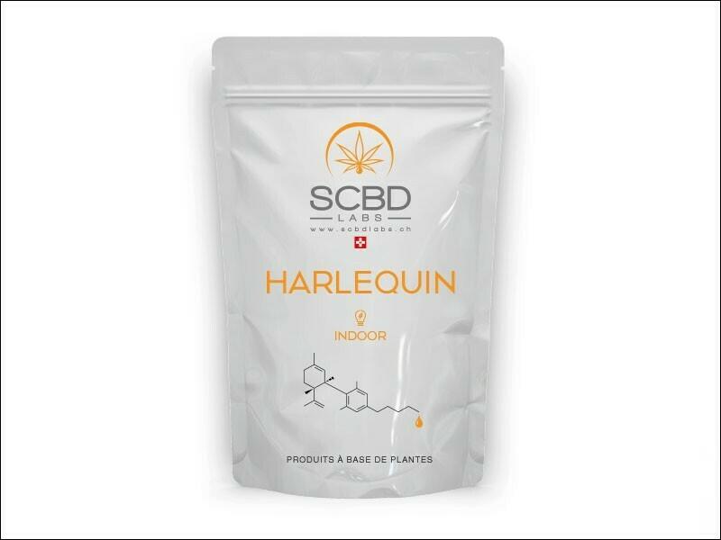 SCBD Labs - HARLEQUIN