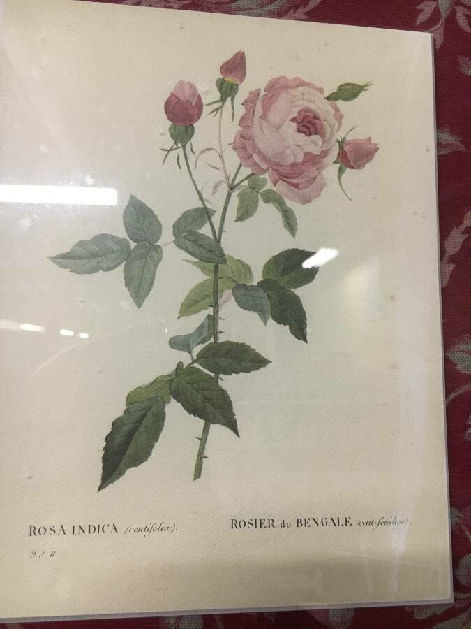 Framed Art - Pink Roses