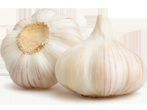 Garlic蒜頭