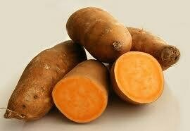 Sweet Potato 甜地瓜