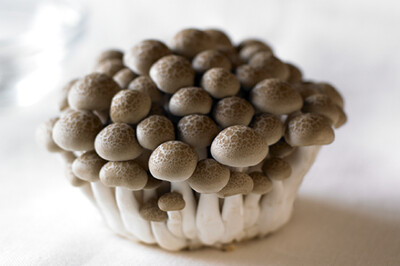 Brown Bunapi Mushroom鸿禧菇