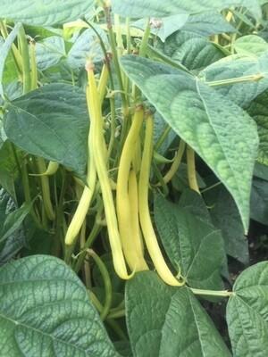 Buschbohnen gelb (500g)