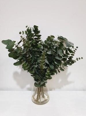 Succulent Eucalyptus Mix