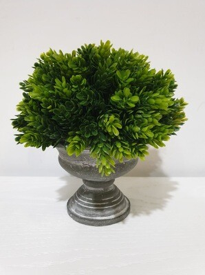 Urn-Formal Moss
