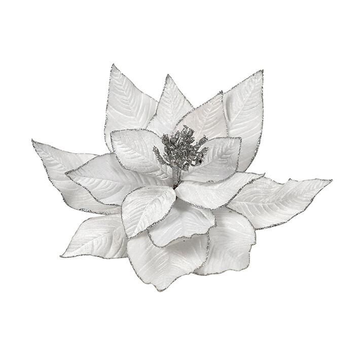 Poinsettia White Silver Edge