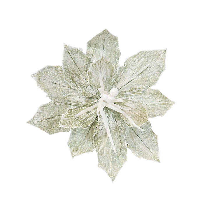 Poinsettia Crinkled Sage