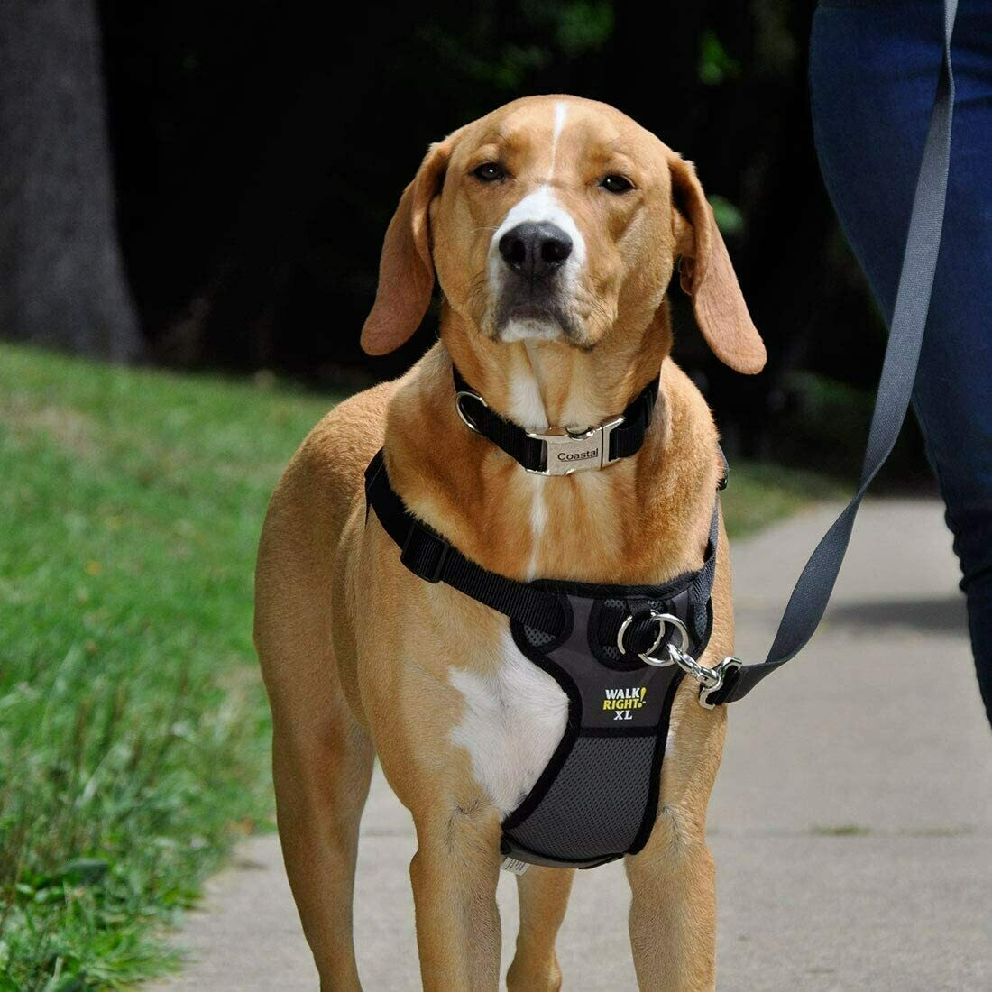 WALK RIGHT HARNESS BLK-XLG.