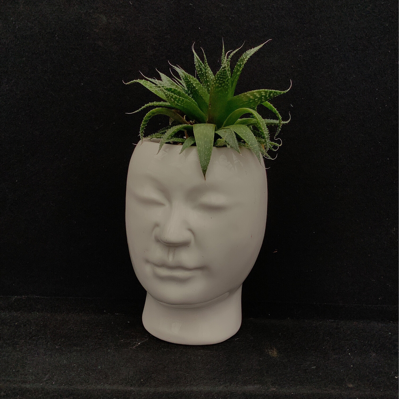 Succulent In Face Pot
