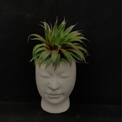 Large Succulent In Face Pot
