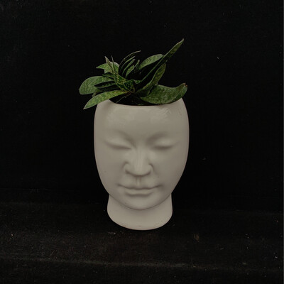 Small Succulent In Face Pot