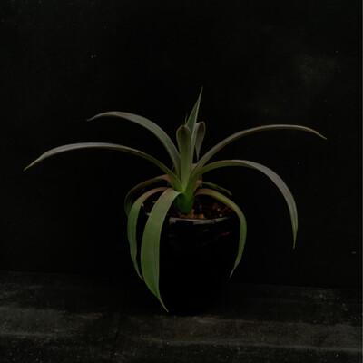 House Plant In Black Pot