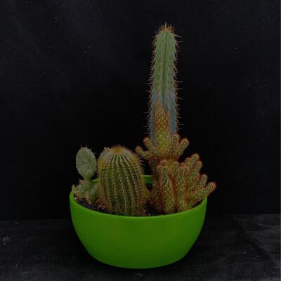 Cactus Arrangement In Green Pot