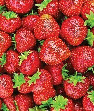 Strawberries - Everbearing
