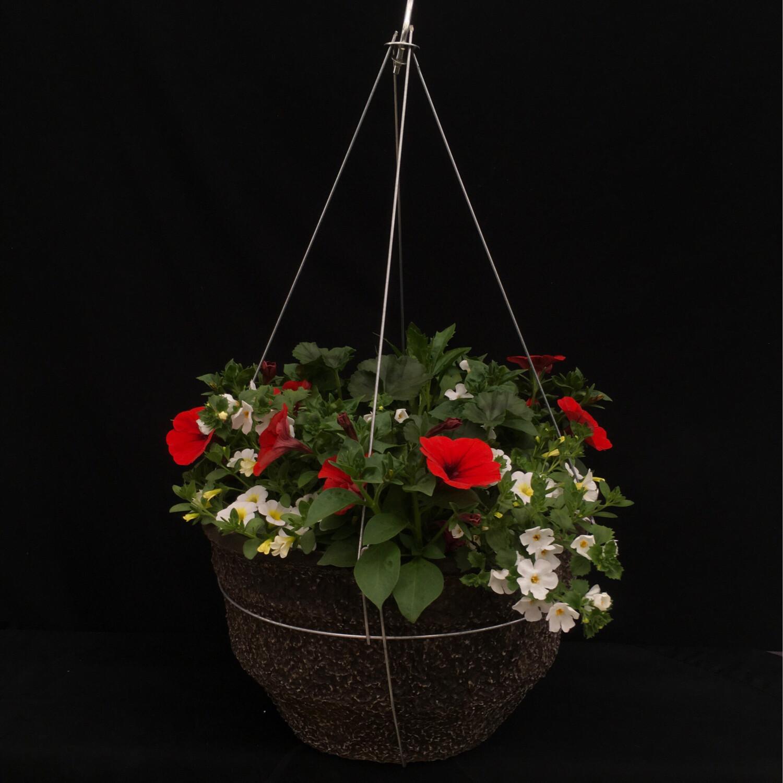 """16"""" Hanging Basket - Full Sun"""