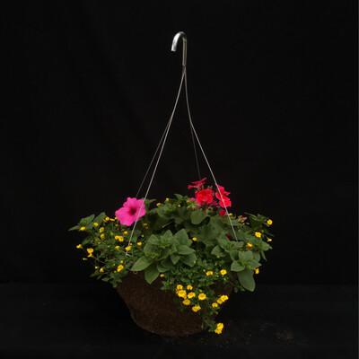 """12"""" Hanging Basket - Full Sun"""