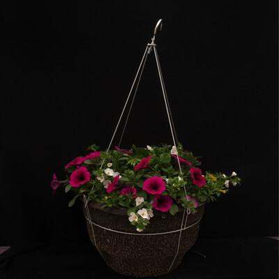 """14"""" Hanging Basket - Full Sun"""
