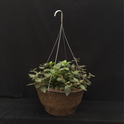 """12"""" Hanging Basket - Shade"""