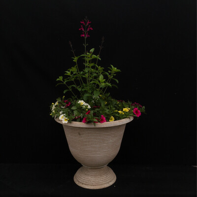 Small Plastic Urn With Million Bells and Salvia - Full Sun