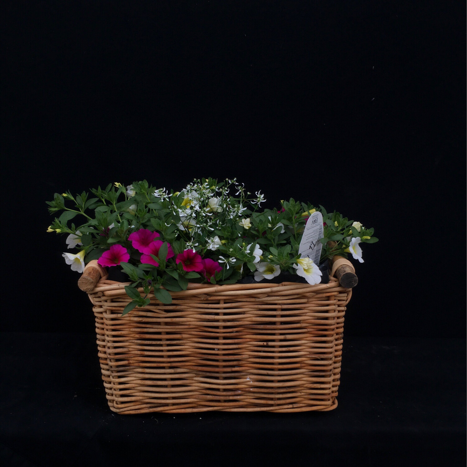 Small Square Basket With Million Bells And Diamond Frost - Full Sun
