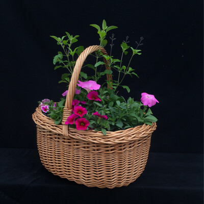 Basket With Pink Flowers - Full Sun