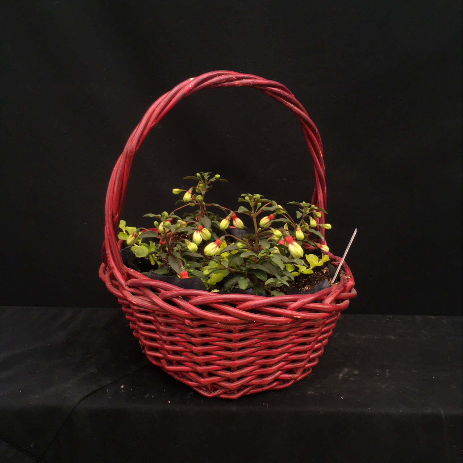 Small Red Basket With Fuchsia - Shade