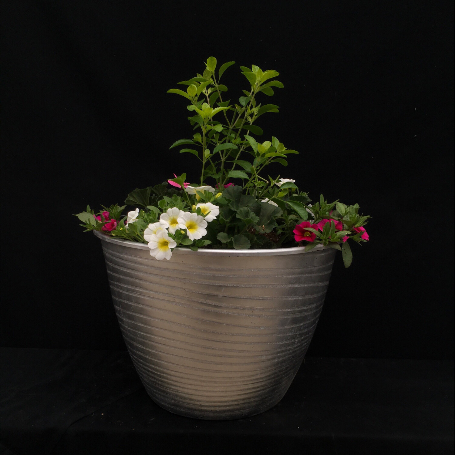 Silver Planter With Pink and White Flowers - Full Sun