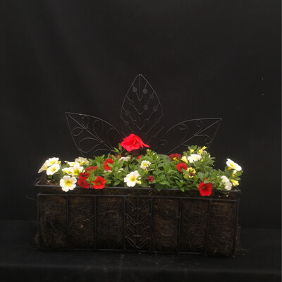 Black Hanging Wall Planter - Full Sun