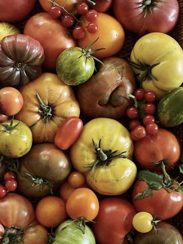 "Heritage Variety Tomato In 4"" Pot"