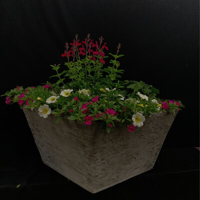 Large Square Planter - Full Sun