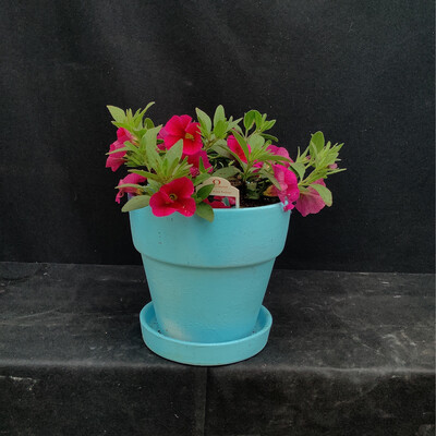 Small Light Blue Pot With Million Bells - Assorted